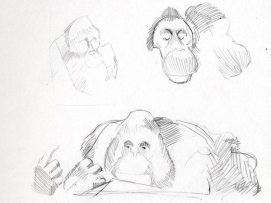Ape_observations_05
