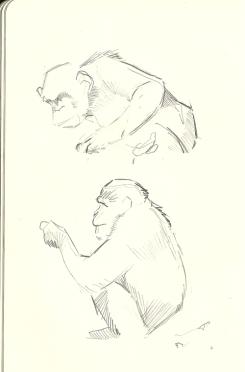 chimpsoct11_01