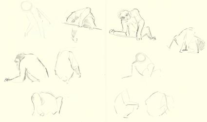 Chimp-obsv_111012
